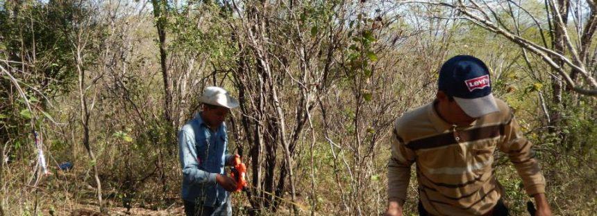 Fundamentales para aprovechamiento sustentable de ecosistemas investigaciones del Laboratorio de Ecología Vegetal del INIRENA