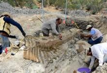 Rescatan la cola de un hadrosauario de 72 millones de años de edad descubierto en Coahuila, México