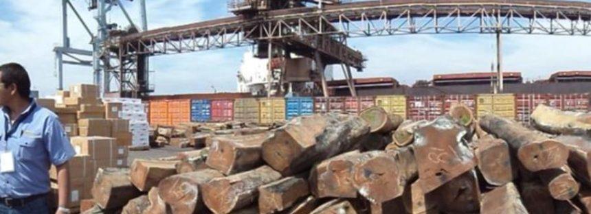 Evita PROFEPA salida ilegal de 1,536 m3 de madera fina que tenía como destino el mercado negro asiático