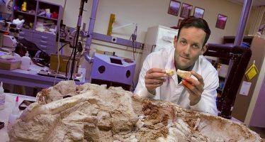 Un nuevo estudio científico apunta que los dinosaurios podrían ser de sangre caliente ABC