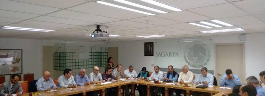 Michoacán exporta aguacate de calidad