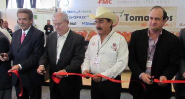 Se consolida México como primer exportador mundial de tomate