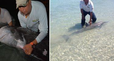 Rescata PROFEPA dos delfines varados en playa de la Paz, BCS