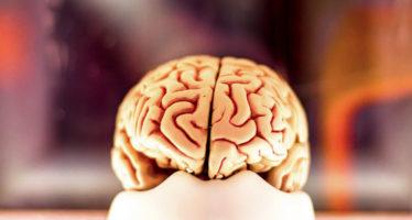 ¿Por qué el ser humano es el animal más inteligente del planeta?