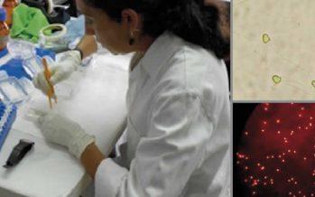 Investigadores del INAPESCA desarrollan técnicas para mayor producción de trucha arcoiris