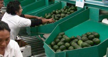 Exportaciones agroalimentarias de México a Japón aumentan 16 por ciento al primer semestre de 2015