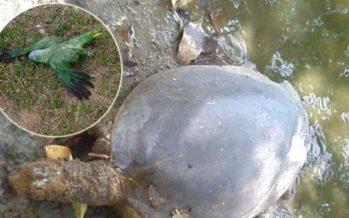 No para muerte de animales en Yumká