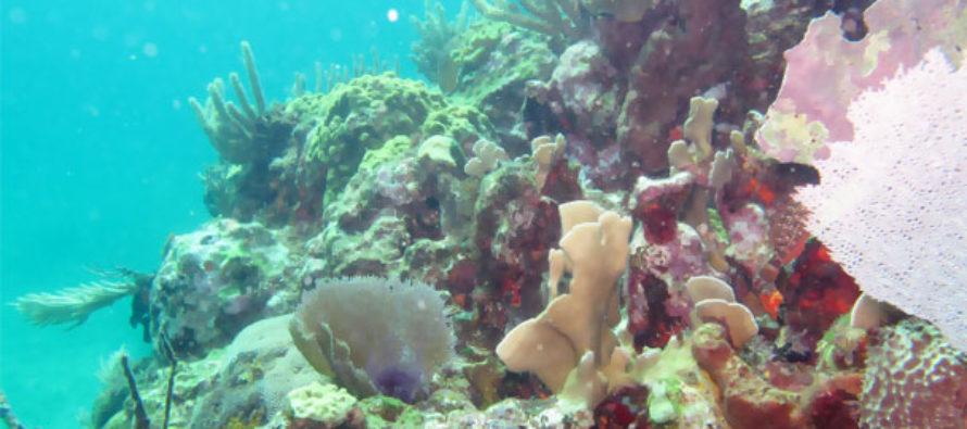 Determina México nuevas épocas y zonas de veda de organismos marinos
