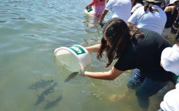 Para conservación de la especie, la UABC libera 2 mil 300 totoabas (Totoaba mcdonaldi) en el Golfo de California