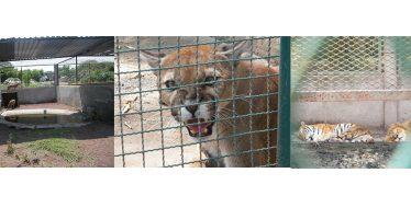 Asegura PROFEPA 135 ejemplares de vida silvestre, en Morelos