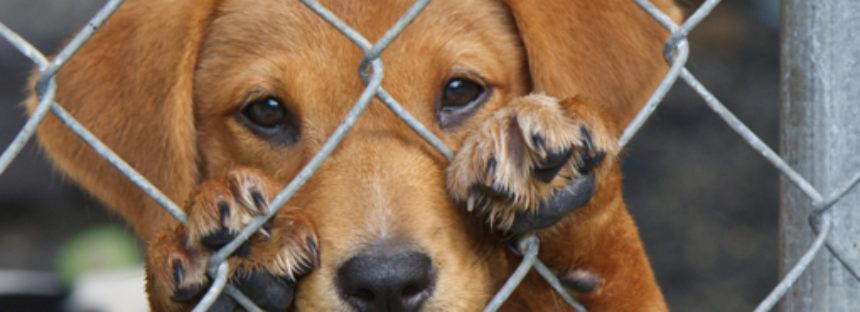 VIDEO exhibe maltrato animal en industrias que los usan para alimento, vestido o experimentos
