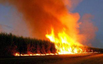 Hungría quema todos los cultivos de transgénicos de Monsanto