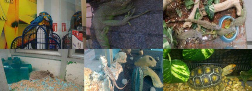 Profepa y Maskota acuerdan suspender venta de 201 especies silvestres