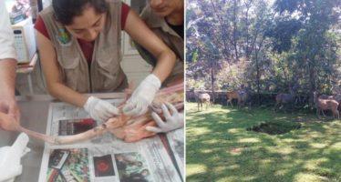 Asegura PROFEPA 26 ejemplares de vida silvestre por no acreditarse su legal procedencia