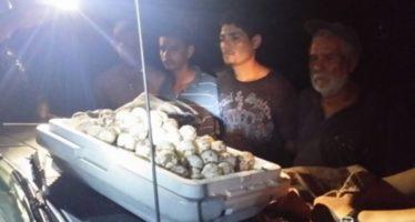 Presenta PROFEPA ante MPF a 7 personas por robo de 372 huevos de tortuga marina en playas de Nayarit