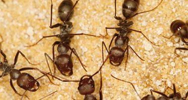 Animales, hongos y otros seres unicelulares tienen un ancestro común: Current Biology