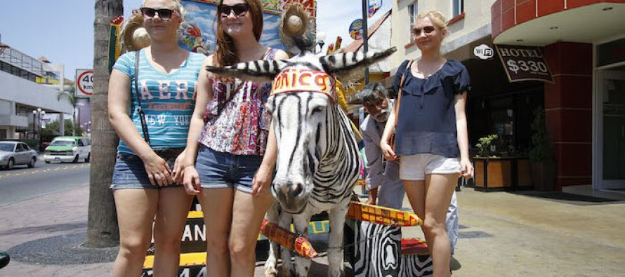 """ONG busca erradicar el uso de """"burros-cebra"""" como atractivo turístico en Tijuana"""