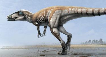 Descubren en Australia dinosaurio carnívoro más grande de la región