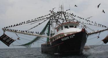 Dan a conocer inicio de temporada de pesca de camarón