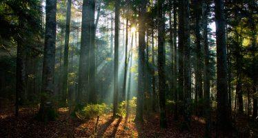 Todos los ecosistemas con bosques están en agonía por culpa de los humanos: estudios