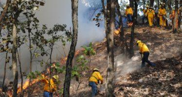 México y Estados Unidos por la protección de bosques