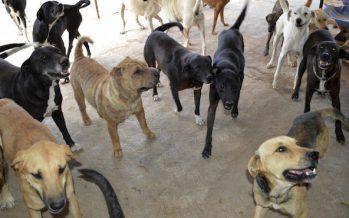 Universidad de Torreón propone hacer composta a partir de perros callejeros