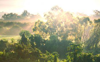ONGs denuncian privatización de la selva de Campeche