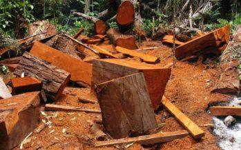 Vigilancia en el Amazonas; una tribu cuida árboles con tecnología