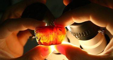 Describen un nuevo tipo de escarabajo prehistórico hallado en una pieza de ámbar
