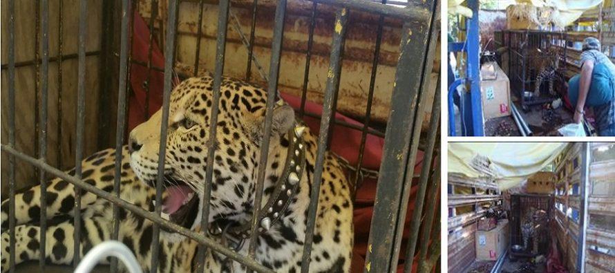 Aseguró PROFEPA 12 animales de vida silvestre que pretendía ser usados para un comercial de televisión