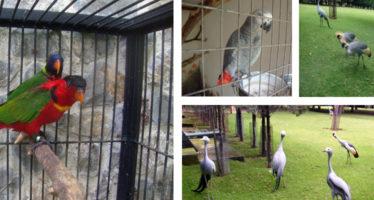 Aseguran animales de procedencia no comprobable en Morelos