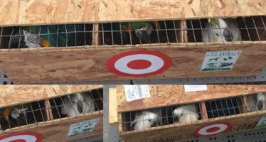 Incautan 10 aves de procedencia incierta en Ciudad Victoria.