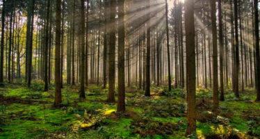 Avances en desarrollo forestal en Chiapas