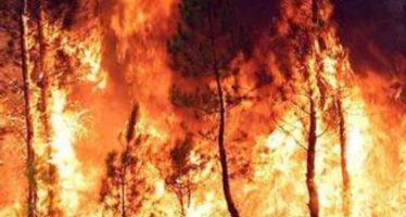 Incendio en Estados Unidos provoca la evacuación de felinos amenazados