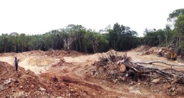 Se ordena la suspensión de tala de arboles en Quintana Roo