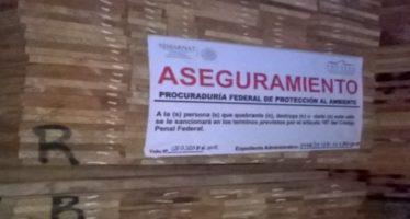 Fueron asegurados 182.526 metros cúbicos de pino en Acapulco
