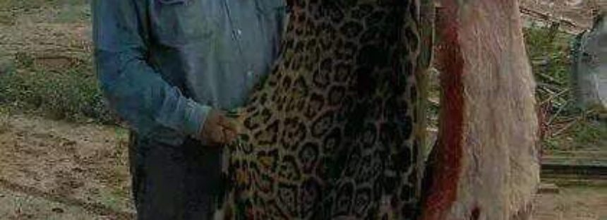En México, por Facebook, exhiben jaguar destazado