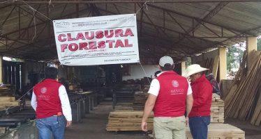 En Tlaxcala, frenan comercio de madera clandestina