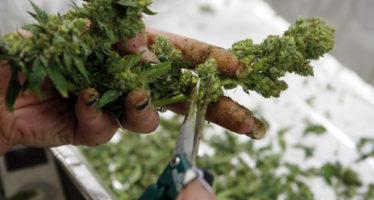 El debate sobre la mariguana en la Corte se pospone una semana