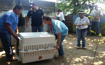 Se aseguran 29 ejemplares de vida silvestre por ilegal posesión, en Manzanillo