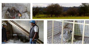 Aseguran 39 ejemplares de vida silvestre por posesión ilícita, en el Estado de México