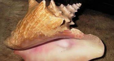 Proyecto de Modificación a la Norma Oficial Mexicana para regular el aprovechamiento del caracol