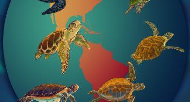 Convención Interamericana para la Protección y Conservación de las Tortugas Marinas, en Chile