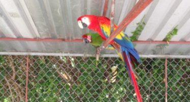 Decomiso por posesión ilícita de vida silvestre, en Hidalgo y Tabasco