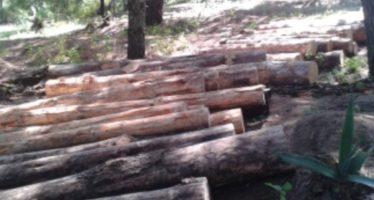 Aseguran 912 piezas de madera ilícita, en Toluca
