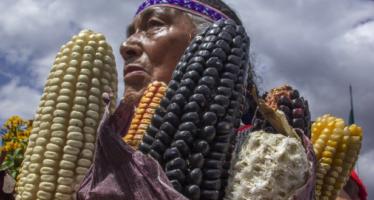 México, capaz de lograr autosuficiencia alimentaria sin usar transgénicos