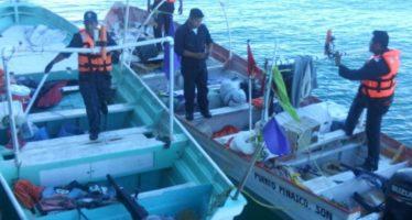 Vaquitas marinas se vieron amenazadas por pescadores irresponsables