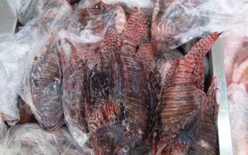 Venta de pez león para consumo humano, en Veracruz