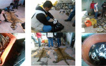 Aseguran partes de fauna silvestre, en Toluca