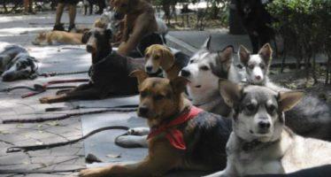 Cómo proteger a tus mascotas en caso de huracán